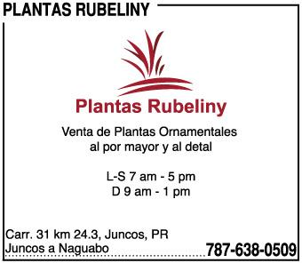Plantas Rubeliny