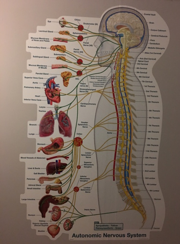Masajes de espalda para embarazadas