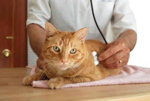 Proveemos todo tipo de servicios y medicina preventiva para sus mascotas como; •  • vacunación  • Hospedaje • Hospitalización • Laboratorio • Farmacia • Rayos-X • Day Care • Cirugía • entre otros  **Ahora con Radiografía Digital.