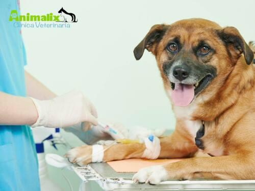 • Medicina General • Vacunación • Esterilización • Castración • Cirugía Menor • Hospitalización