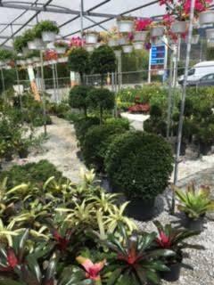 Plantas Ornamentales Hacemos Entrega