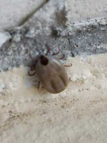 •Control de plaga  •Exterminadores de plagas •Exterminadores de Comején  •Trabajos de Comején  •Fumigadores  •Fumigacion •Plagas control en Puerto Rico