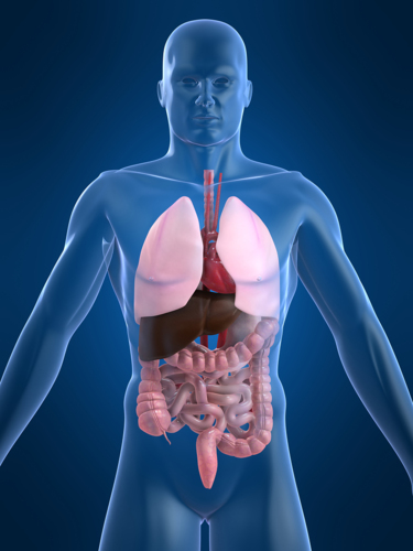 Medicina Interna Especialista en: - Enfermedades cardíacas - Respiratorias - Renales - Artritis - Colesterol - Diabetes - Tiroides y más