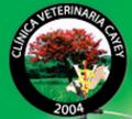 Clínica Veterinaria Cayey